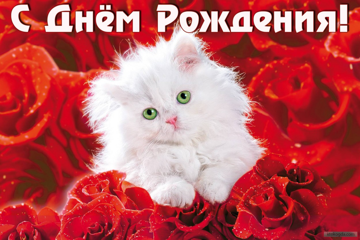 http://s12.image1.org/images/2015/10/27/1/e8916b63cc63c9be49e4d15c5c044015.jpg